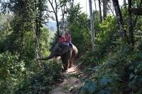 Persone a dorso di elefante