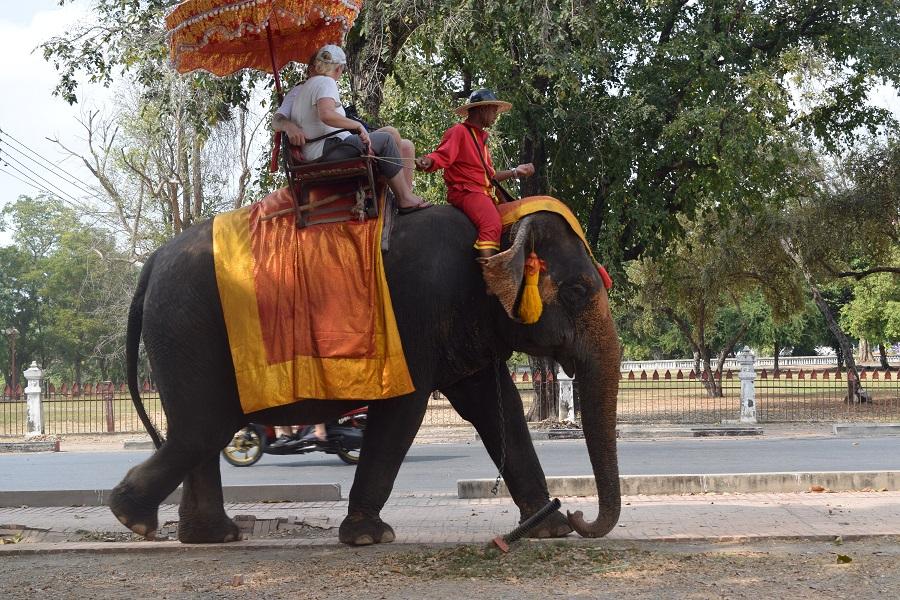 Trekking a dorso di un elefante ad Ayutthaya
