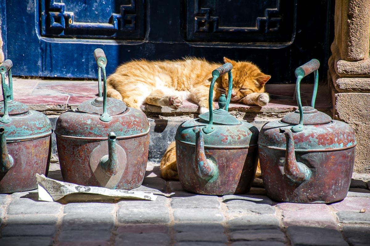Gatto a riposo nelle vie di Essaouira
