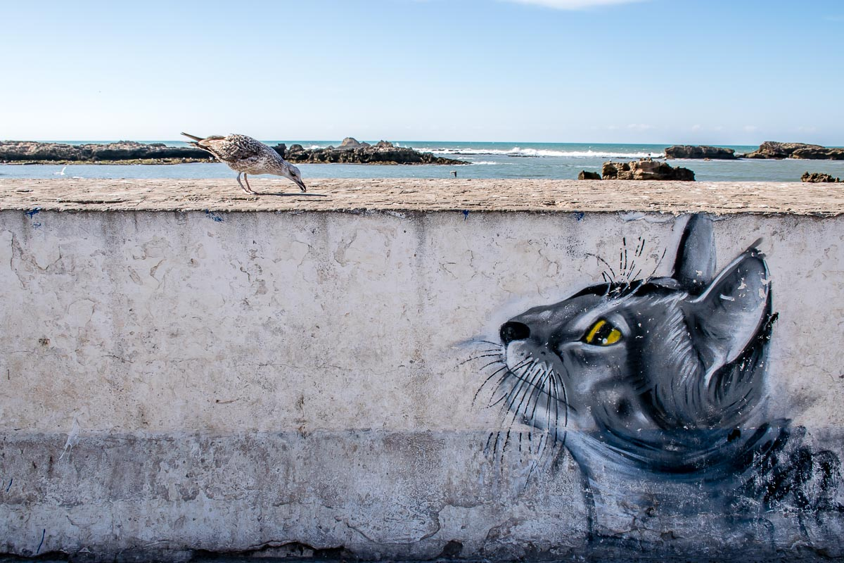 Murales di un gatto a Essaouira