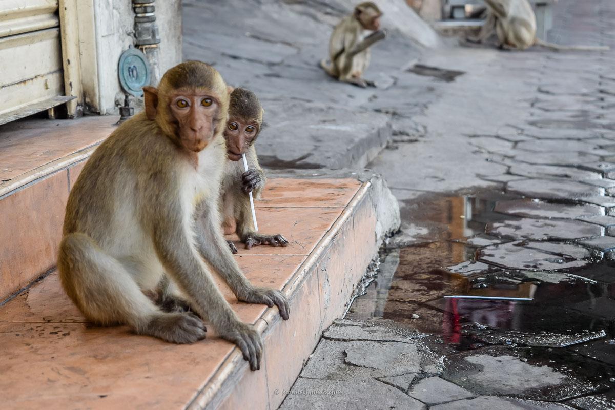 Scimmie a Lopburi sul marciapiede