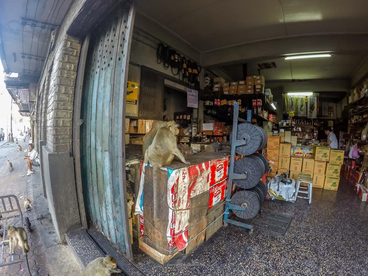 Scimmie nei negozi a Lopburi
