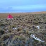 Tenda steppa patagonica